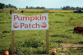 Gainesville Pumpkin Patch by Love To Live In Pensacola Florida October 2013