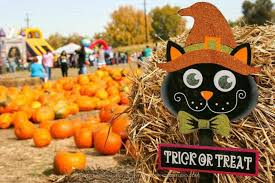 Pumpkin Patches Near Colorado Springs Co by 10 Great Pumpkin Patches In Colorado