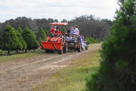 Eustis Christmas Tree Farm by Santa U0027s Christmas Tree Forest Eustis Offers A Chance To Cut Your