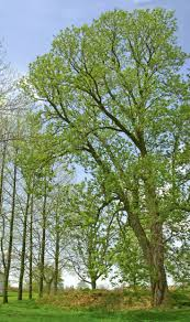 244 Best Trees Images On Pinterest   Fruit, Mesquite Tree And Botany Amish Dog Breeders Face Heat News Lead Cleveland Scene Ritual Inspiration Scott Hagan Barn Artist Sonima Allstate Tour 2016iowa Foundation Metal Barns Ohio Oh Steel Pole Prices 821 Best Ohio Images On Pinterest Country Barns And Fallidays Find It Here Buckeye Buildingsnatural Wooden Outdoor Fniture From Hershy Way A Trusted Reputation Built Scratch Business This One Is 70 Just East Of Dayton I Have Seen Polebarnspicforhomepagejpg Serbinstudio February 2012