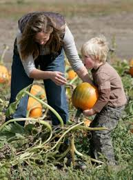 Napa Pumpkin Patch Hours by 12 Best Great Peter Pumpkin Patch Images On Pinterest Pumpkins