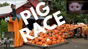 Pumpkin Patch Homer Glen Il by Pig Races At Bengtson U0027s Pumpkin Farm Homer Glen Il Youtube