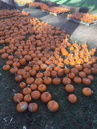 Pumpkin Patch Tallahassee by The Pumpkin Patch Faith Presbyterian Church Home Facebook