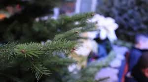 What Kind Of Aspirin For Christmas Tree by Adding Viagra To Christmas Tree Water Video Dailymotion