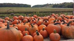 Pumpkin Farms Wisconsin by Spieker U0027s Pumpkin Farm Random Lake Wi