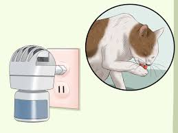 Excessive Hair Shedding In Cats by 100 Excessive Hair Shedding In Cats Pet Dog Cat Hair Fur
