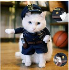 costume for cat cat costumes the cutest pet costumes cool stuff for cats
