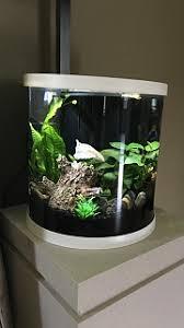 upgrade topfin 3 5 gal enchant or bettaflo aquarium advice