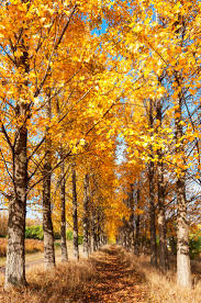 Directions To Hartsburg Pumpkin Festival by 4301 Best Fall And Halloween Images On Pinterest Landscapes