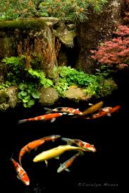 250 Best Koi And Fish Ponds Images On Pinterest | Goldfish ... Koi Water Barn Archive 43 Best Bassin Tang Images On Pinterest Backyard Ponds The Market Thekoimarket Twitter Best 25 Ponds For Sale Ideas Polymer Resin Diy Upcoming Auctions Larry A Watson Realtorauctioneer 44 Japanese Koi Fish And Listing 410 Scott Westmoreland Ks Mls 20171278 Cssroads 1617 Japankois Carp 250 Goldfish 189 Aquarium Pond From Niigata