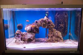A FOWLR Tank (Fish Only With Live Rock) « Simons Fishy Tales Aquarium Aquascaping Rocks Aquascape Designs Ideas Project Reef Rock 21 Dry Walt Smith Bulk Supply Review Real Generation 4 Digitalreefs News Info How To Live Purple Live Rock Youtube Updated Clear Pics Newbies Attempt At Aquascaping So Far 3reef Design Aquafishvietcom Bring Back The Wall News Builders Keeping Austin Club Walls For A Tank Callorecom River Suggestion Planted Forum