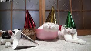 Best Week Happy Birthday Cat GIF by Cheezburger
