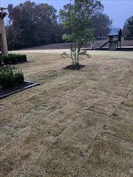 best 25 zoysia sod ideas on pinterest zoysia grass box hedge