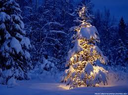 Tannenbaum Christmas Tree Farm Michigan by Lonely Christmas Tree Christmas Tree Winter And Holidays