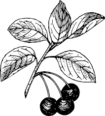 cranberry black and white free cherry clipart