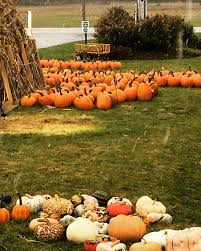 Grandville Mi Pumpkin Patches by Post Family Farm Home Facebook