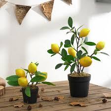 bonsai zitrone baum samen kleine zitronenbaum für hausgarten