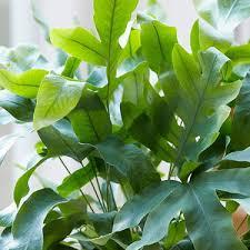 top 10 luftreinigende pflanzen bakker