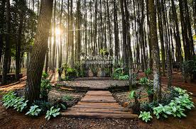 Foto 6 Hutan Pinus Mangunan