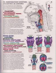 Kaplan Coloring Book Anatomy Kapit Download Body