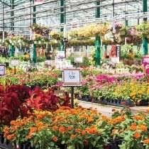 Petitti Garden Centers Reviews