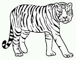 Picture Of A Tiger To Color Coloring