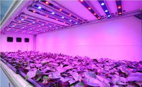 led grow light bulbs lowes gridthefestival home decor