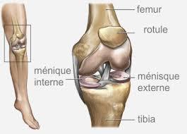 chirurgie des lésions méniscales du genou chirurgie orthpedique