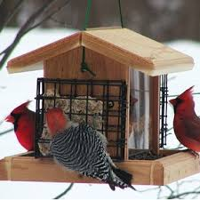 Suet & Seed Cake Bird Feeders You ll Love