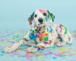 30 Dog Breeds That Shed The Most by 11 Spotted Facts About Dalmatians Mental Floss