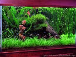 aquarium d eau douce l aquarium et l aquariophilie moderne avec aquaportail eu
