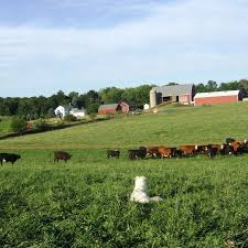 Pumpkin Farms In Flint Michigan by Find Local Beef From Michigan Farms And More Agrilicious