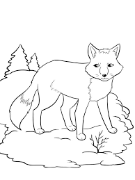 Animal Kingdom Coloring Book Fox Pages Download And Print