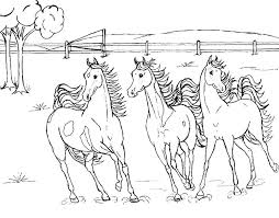 Three Horses Roaming Wild Horse Coloring Pages