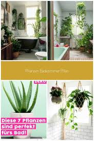 4 zimmerpflanze wenig licht schäden in 2021 pflanzen