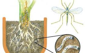 trauermücken an zimmerpflanzen bekämpfen trauermücken