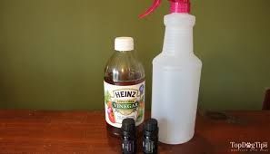 Homemade Flea Powder For Carpet by How To Make Homemade Flea Spray For Dogs 3 Recipes