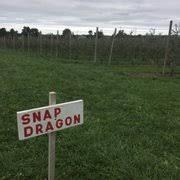 Apple Pumpkin Picking Syracuse Ny by Navarino Orchard 21 Photos U0026 15 Reviews Fruits U0026 Veggies