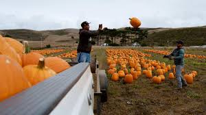 Pumpkin Patch San Jose California by 360 Gallery Pumpkin Patches Bring Crowds To Half Moon Bay Nbc