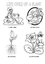 English Worksheet LIFE CYCLE OF A PLANT