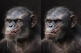Cool Koba Concept Art - DAWN OF THE PLANET OF THE APES Closer Look Dawn Of The Planet Apes Series 1 Action 2014 Dawn Of The Planet Apes Behindthescenes Video Collider 104 Best Images On Pinterest The One Last Chance For Peace A Review Concept Art 3d Bluray Review High Def Digest Trailer 2 Tims Film Amazoncom Gary Oldman
