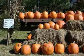 Pumpkin Picking Nj 2015 by Halloween In New Jersey The Best 2017 Events