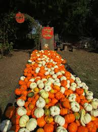 Pumpkin Picking Ct Best by 15 Best Pumpkin Picking Oklahoma Agritourism Images On Pinterest