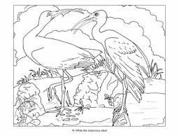 John James Audubon Birds Coloring Book
