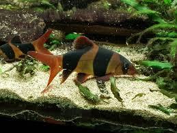 aquarium geant a visiter belgique aquarium of brussels bruxelles 2018 ce qu il faut