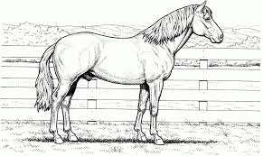 Quarter Horse Coloring Page Pages Horses
