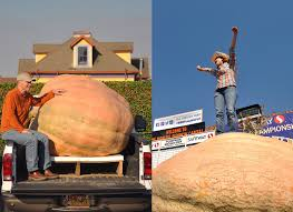 Half Moon Bay Pumpkin Festival Winner by The Heavyweight Showdown Of The Two Ton Pumpkins U2013 The Six Fifty