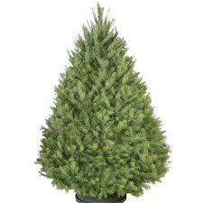 Nordmann Fir Christmas Tree Nj by Types Of Real Christmas Trees The Home Depot