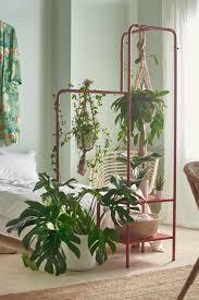 mit pflanzen dekorieren natur für dein zuhause dekorieren