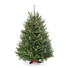 Blue Ridge Christmas Trees 3 Ft Tabletop Premium Grade Real Tree Stand Included